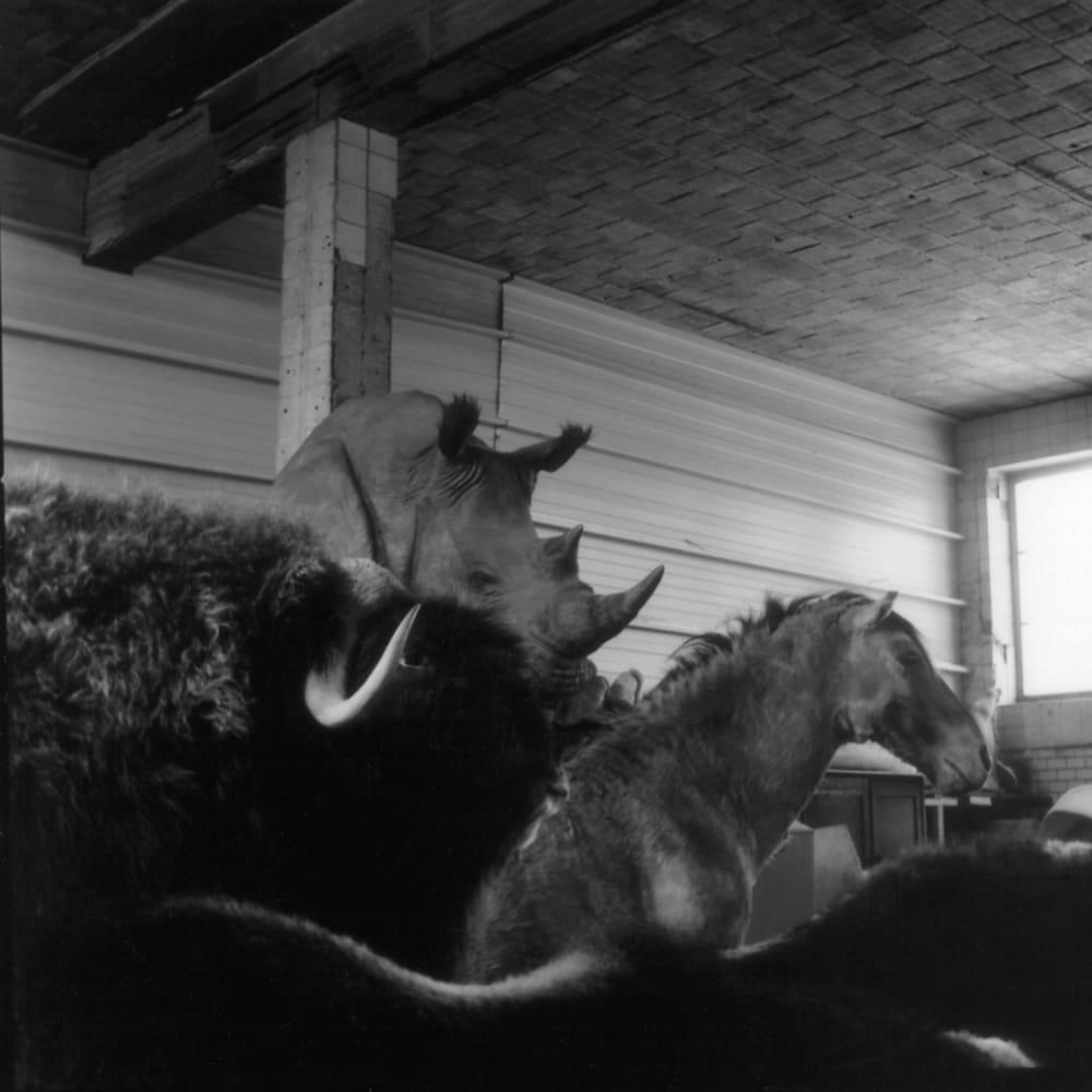 Série de photographies d'Émilie Danchin.
